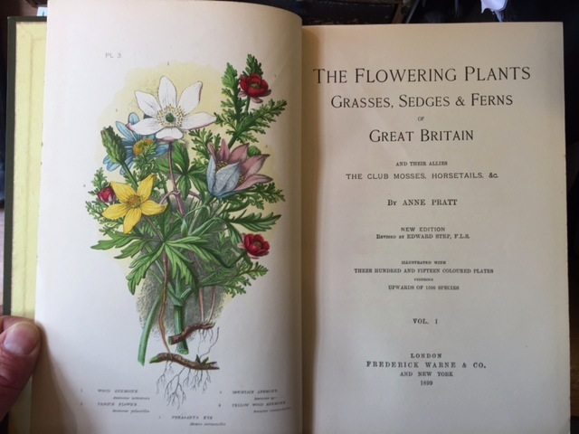Image for The Flowering Plants, Grasses, Sedges & Ferns of Great Britain and Their Allies, the Club Mosses, Horsetails, &c. 4 Vols