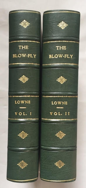 The Anatomy, Physiology, Morphology, and Development of The Blow-Fly ...