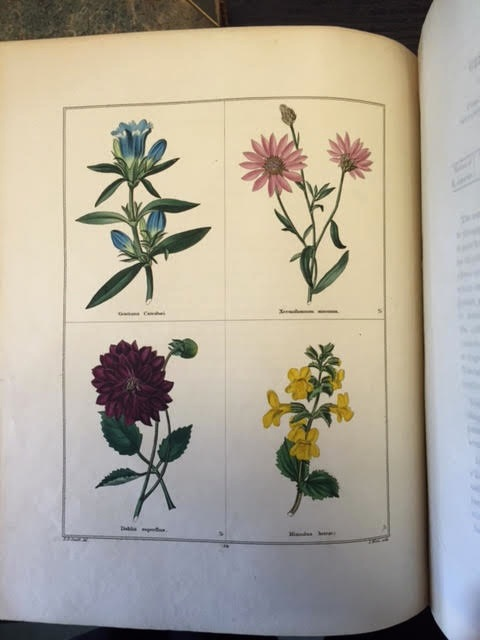 Image for The Botanic Garden; Consisting of Highly Finished Representations of Hardy Ornamental Flowering Plants, Cultivated in Great Britain with Their Classification History Culture and Other Interesting Information.  Volumes 1 to 10