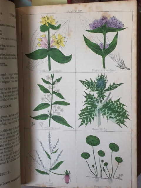 Image for The Cyclopaedia of Botany and Complete Book of Herbs: Forming a History and Description of All Plants, British or Foreign Which are Known to be Useful to Man