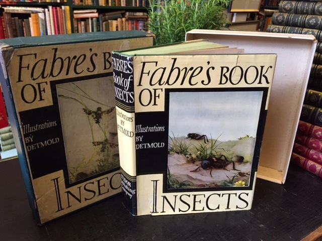 Image for Fabre's Book of Insects