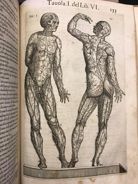 Anatomia : Del corpo humano composta per M. Giuan Valuerde di Hamusco, & da luy con moto figure di rame, et erditi discorsi in luce mandata