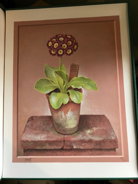 Image for The Auricula